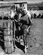 Sabrina at Toolern Valley 1959, with horse and sheep